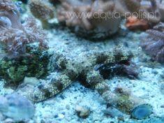 Sea starfish Starfish, Sea, Ocean