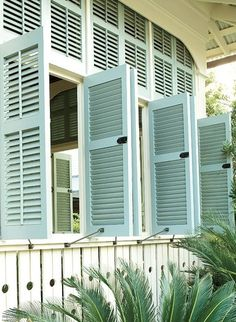 shutters and sago palm <3