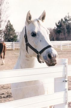 White Flex Fence