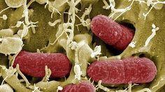 La microbiota intestinal del bebé predice su riesgo de alergias y asma