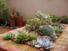 Succulent Life: Top 43 Most viewed images, tanned and shared on the blog on Facebook Fanpage - 22:04 to 27/04/2013