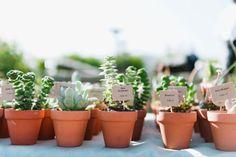 succulents in mini terracotta pots