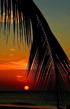 Palm leaf at sunset by  Enrique Colombo