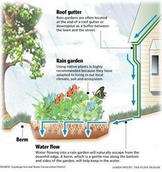 A rain garden is a scooped-out plot strategically located to capture stormwater spilling from impervious surfaces, such as rooftops and driveways. Some environmental groups are encouraging rain gardens and educating the public about them.