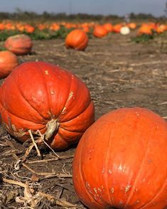 Im so happy Fall is here! The network is so big I can post pics no matter how far away the pumpkin patch is. What is your favorite thing about fall? Fall Is Here, Instagram Images, Instagram Posts, Happy Fall, Far Away, Pumpkin, Canning, Vegetables, Halloween