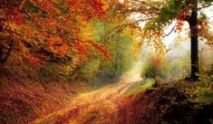 What is an Indian Summer? When is Indian Summer? Find out all about Indian Summer and its significance from The Old Farmer's Almanac. Forest Path, Autumn Forest, Autumn Fall, Forest Road, Forest Light, Autumn Nature, Nature Nature, Happy Autumn, Autumn Cozy