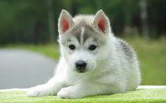 Resultado de imagen de cute puppies