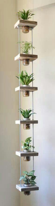 Déco originale avec des plantes d'intérieur.