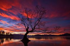 Hand To Hold. - Lake Wanaka and Tree, South Island, New Zealand.  A new version of an old classic.  Darren J.