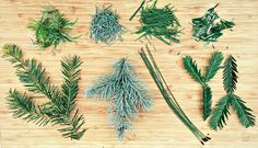 Happy winter solstice! Foraging for pine needles is easy, and you can make a tasty and medicinal pine needle tea.
