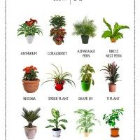 1000 Images About Plants On Pinterest Best Indoor Plants Houseplant And Fiddle Leaf Fig