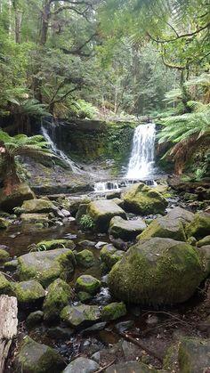 Mt. Field National Park, Tasmania Australia