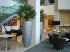 Large silver Cylinder Planters adjacent to each other
