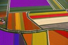 Aerial view of tulip fields, near Den Helder, The Netherlands