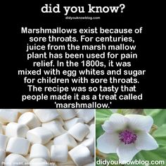 Marshmallows exist because of sore throats. Juice from marsh mallow plant used for pain relief. Mixed with egg whites & sugar for children with sore throats. So tasty it became a treat,