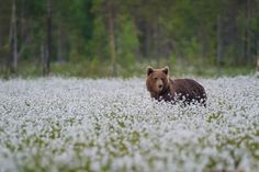 Teddy bear in Finland's Taiga by Dionys Moser on 500px.