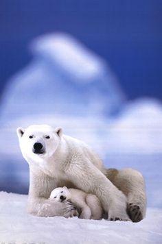 Love, love, love polar bears!!