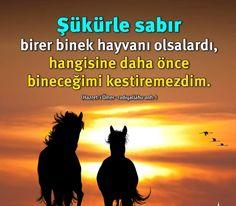 Şükür ve Sabır.   #şükür #sabır #hzömer #binek #sözler #islam #istanbul #ilmisuffa