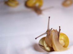 Snail kiss