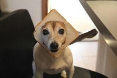 Puppy loaf?