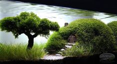 Decided to try out a small aquascaping project. Aquascaping is landscaping, but underwater basically. Planted Aquarium, Aquarium Aquascape, Aquarium Landscape, Nature Aquarium, Aquarium Fish Tank, Fish Tanks, Corner Aquarium, Aquascaping, Planta Vascular