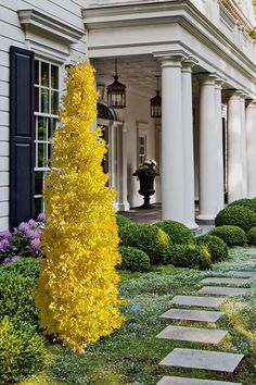 Trees And Shrubs, Flowering Trees, Trees To Plant, House Landscape, Landscape Design, Garden Design, Garden Shrubs, Garden Trees, Front Yard Landscaping