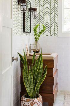 sansevieria plante adaptée pour votre salle de bain