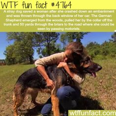 Stray dog saves the life of a woman! - Faith in animals RESTORED!  ~WTF fun facts