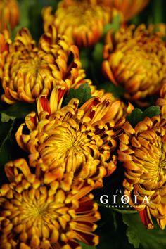 アナスタシア。輪が大きく存在感のある、シックな雰囲気のお花+*.。