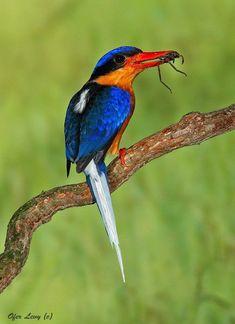 TOP 10 Best Birdwatching Spots around the World