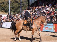 Concurso de emprendados, caballos criollos con pilchas y aperos históricos Palermo 2009.: Concurso de emprendados Palermo 2009.