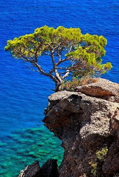Pine tree hanging on a cliff over Agia Fotia beach Ierapetra Lasithi Crete. # Pine tree hanging on a Tree Photography, Landscape Photography, Crete Island, Watercolor Pictures, Beaches In The World, Pine Tree, Greek Islands, Natural Wonders, Beautiful Places