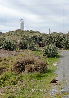 Das Cape Foulwind ist der perfekte Ausgangspunkt für einen Roadtrip entlang der Westküste Neuseelands. Roadtrip, New Zealand, Country Roads, Mountains, Nature, Travel, New Zealand South Island, National Forest, Voyage