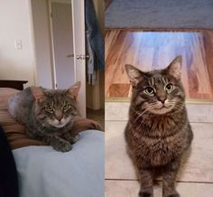 Meet Buddy he showed up at our door one day so we adopted him. Before and after adoption pics. https://ift.tt/2I4gYaZ