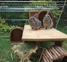 Nosy and Spike from Warren Bunny Boarding show us how rabbits need lots of space and height in their run