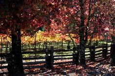 Drive through the wineries in the fall