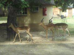 Bergendal-Kruger National Park