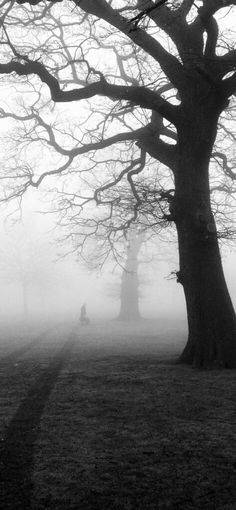 Iphone Wallpapers Trees mist fog eerie wallpaper Hd - Best Home Design Ideas
