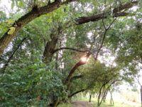 Vycházková trasa - Modrý Mlýn Trunks, Plants, Drift Wood, Tree Trunks, Plant, Planets