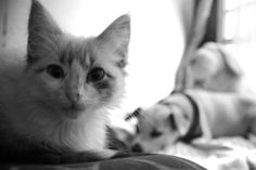 Photograph, Facebook, Cats, Animals, Happy Day, Guys, Photography, Gatos, Animales