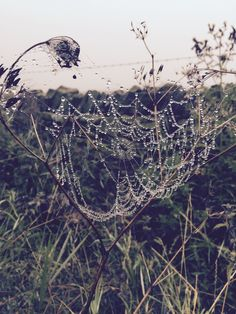 Dewy cobwebs on an early morning walk from the hut, Eyam