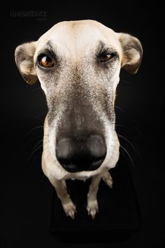 You talking to me? Are YOU talking to ME? by Elke Vogelsang on 500px