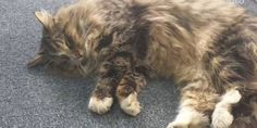 Cat Found Living It Up In Pet Food Warehouse After Missing One Year | THE PUSSINGTON POST