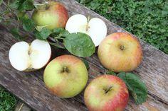 Lisas Fotowelt: Apfelsorten bestimmen