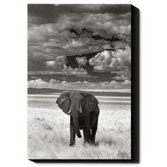 Lone Elephant Wall Art