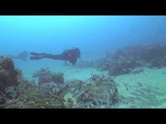 Fun Center Fort Lauderdale Scuba Diving - http://www.florida-scubadiving.com/florida-scuba-diving/fun-center-fort-lauderdale-scuba-diving/