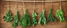 Kruiden die je in de herfst kunt oogsten: tijm, salie en oregano.