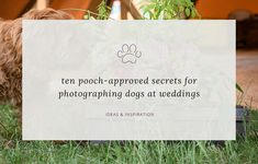 A (photographer's) dog's guide on how to get priceless photos of your pooch on your wedding day. Words and photos by dog-friendly wedding photographer Sarah Vivienne Photography; On Your Wedding Day, Vivienne, Dog Friends, Paper Shopping Bag, The Secret, Your Dog, How To Get, Weddings, Words