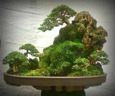 Según entiendo yo es un bosque sobre piedra