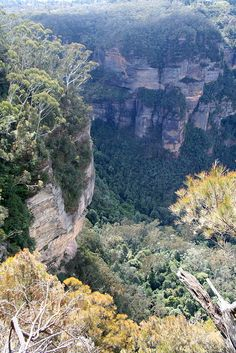 """The """"Prince Henry Cliff Walk"""" provides stunning views over the Jamison Valley and Leura Forest, NSW Beautiful Scenery, Stunning View, Travel Oz, Blue Mountains Australia, Prince Henry, Countries Of The World, Australia Travel, Geology, Travel Ideas"""